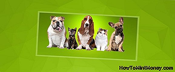 Pet Food Distributor